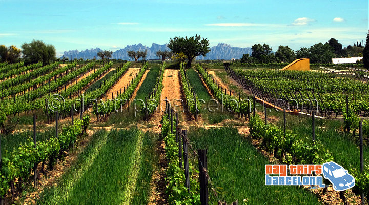 Montserrat and Torres Winery day tour
